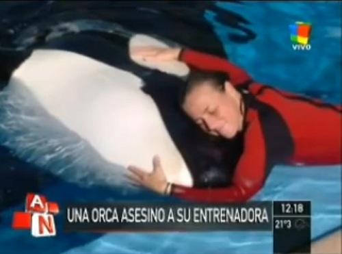 Orca mata a su entrenadora