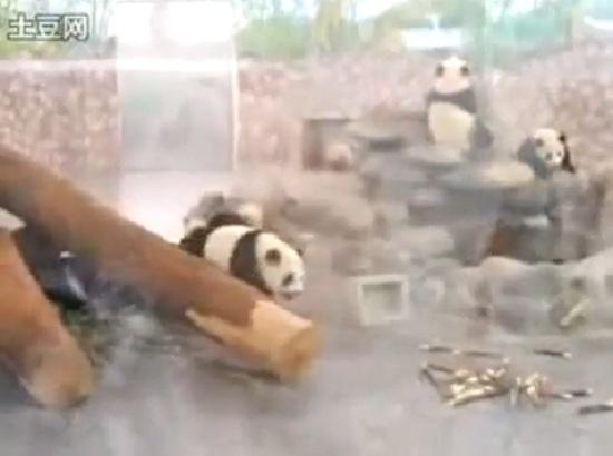 Pandas al escape